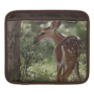 White-tailed Deer, Odocoileus virginianus, 2 iPad Sleeve