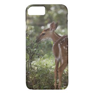 White-tailed Deer, Odocoileus virginianus, 2 iPhone 7 Case