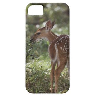 White-tailed Deer, Odocoileus virginianus, 2 iPhone SE/5/5s Case