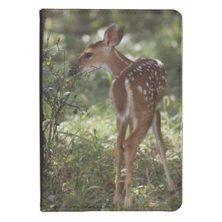 White-tailed Deer, Odocoileus virginianus, 2 Kindle Touch Case