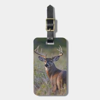 white-tailed deer Odocoileus virginianus) 2 Luggage Tag