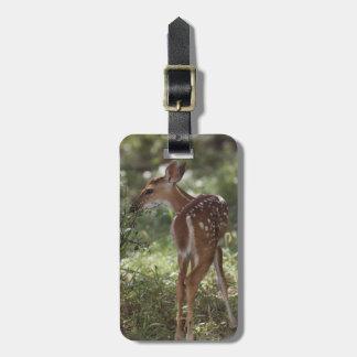 White-tailed Deer, Odocoileus virginianus, 2 Luggage Tag
