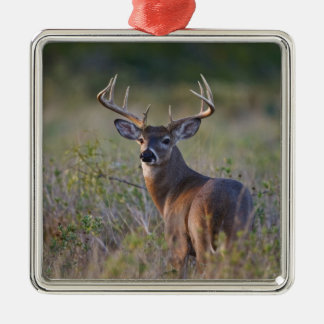 white-tailed deer Odocoileus virginianus) 2 Metal Ornament