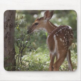 White-tailed Deer, Odocoileus virginianus, 2 Mouse Pad