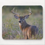 """white-tailed deer Odocoileus virginianus) 2 Mouse Pad<br><div class=""""desc"""">white-tailed deer (Odocoileus virginianus) male with hard antlers,  in grassland,  Texas,  USA,  autumn � Larry Ditto / DanitaDelimont.com</div>"""