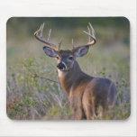 white-tailed deer Odocoileus virginianus) 2 Mouse Pad