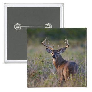 white-tailed deer Odocoileus virginianus) 2 Pinback Button
