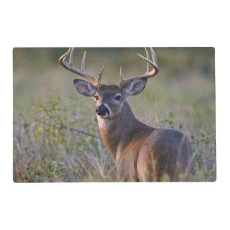 white-tailed deer Odocoileus virginianus) 2 Placemat