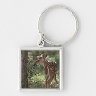 White-tailed Deer, Odocoileus virginianus, 2 Silver-Colored Square Keychain