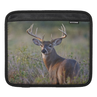 white-tailed deer Odocoileus virginianus) 2 Sleeve For iPads