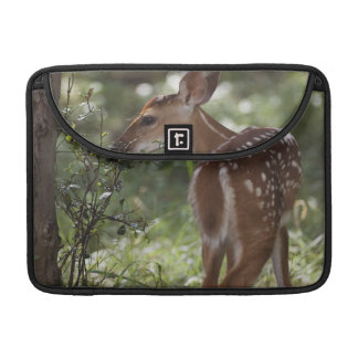 White-tailed Deer, Odocoileus virginianus, 2 Sleeve For MacBook Pro