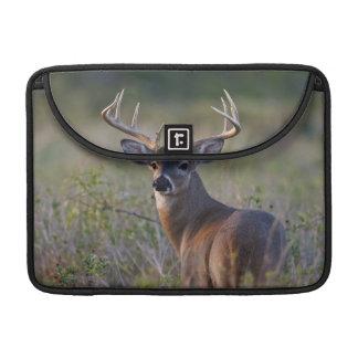 white-tailed deer Odocoileus virginianus) 2 Sleeve For MacBooks