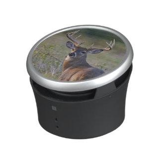white-tailed deer Odocoileus virginianus) 2 Speaker