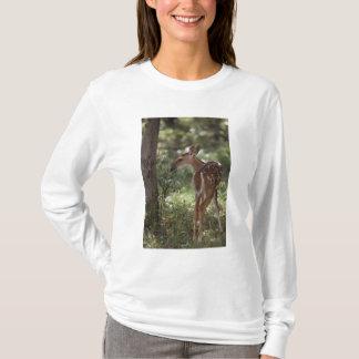 White-tailed Deer, Odocoileus virginianus, 2 T-Shirt