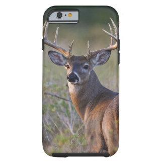 white-tailed deer Odocoileus virginianus) 2 Tough iPhone 6 Case