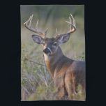 """white-tailed deer Odocoileus virginianus) 2 Towel<br><div class=""""desc"""">white-tailed deer (Odocoileus virginianus) male with hard antlers,  in grassland,  Texas,  USA,  autumn   Larry Ditto / DanitaDelimont.com</div>"""