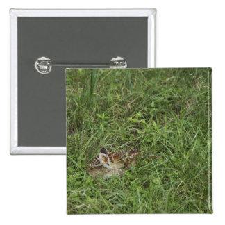 White-tailed Deer, Odocoileus virginianus, 3 Pinback Button