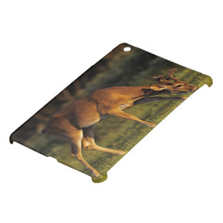 White-tailed Deer, Odocoileus virginianus, 4 Cover For The iPad Mini