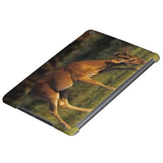 White-tailed Deer, Odocoileus virginianus, 4 iPad Air Case