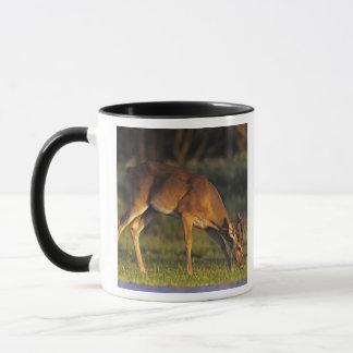 White-tailed Deer, Odocoileus virginianus, 4 Mug