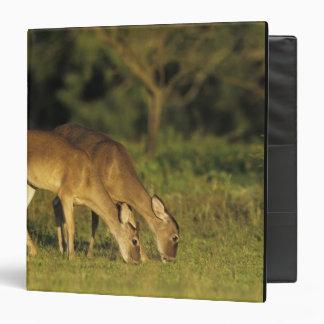 White-tailed Deer, Odocoileus virginianus, 5 3 Ring Binder