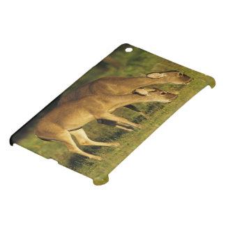 White-tailed Deer, Odocoileus virginianus, 5 Cover For The iPad Mini