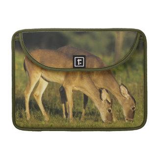 White-tailed Deer, Odocoileus virginianus, 5 MacBook Pro Sleeve