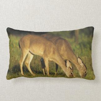 White-tailed Deer, Odocoileus virginianus, 5 Throw Pillow
