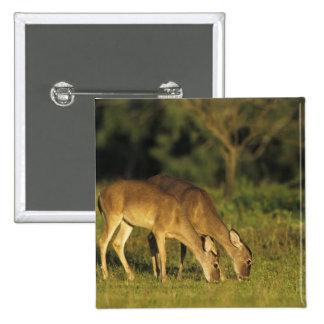 White-tailed Deer, Odocoileus virginianus, 5 Pinback Button