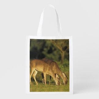 White-tailed Deer, Odocoileus virginianus, 5 Reusable Grocery Bag