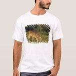 White-tailed Deer, Odocoileus virginianus, 5 T-Shirt