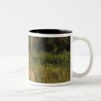 White-tailed Deer, Odocoileus virginianus, 5 Two-Tone Coffee Mug