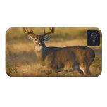 White-tailed Deer (Odocoileus virginianus) adult iPhone 4 Case-Mate Cases