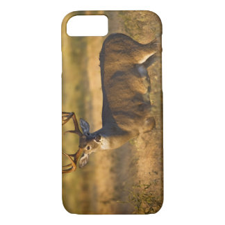 White-tailed Deer (Odocoileus virginianus) adult iPhone 7 Case