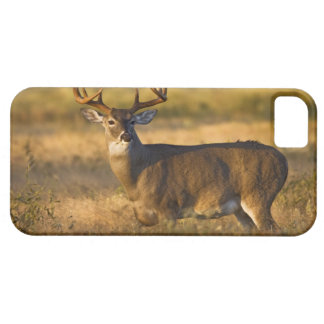 White-tailed Deer (Odocoileus virginianus) adult iPhone SE/5/5s Case