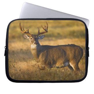 White-tailed Deer (Odocoileus virginianus) adult Laptop Sleeve