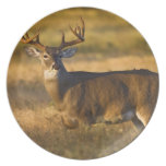 White-tailed Deer (Odocoileus virginianus) adult Melamine Plate