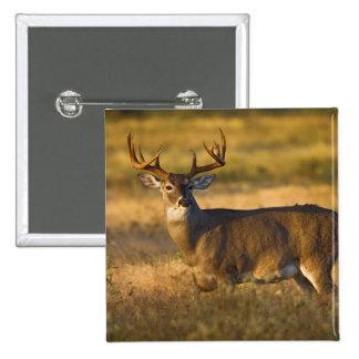 White-tailed Deer (Odocoileus virginianus) adult Pinback Button