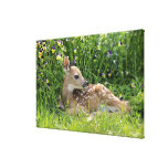 White-tailed deer (Odocoileus virginianus) Gallery Wrapped Canvas