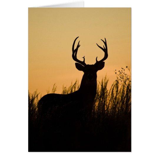 white-tailed deer Odocoileus virginianus) Card