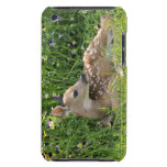 White-tailed deer (Odocoileus virginianus) iPod Touch Cover