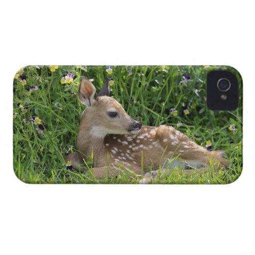 White-tailed deer (Odocoileus virginianus) iPhone 4 Covers