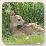 White-tailed deer (Odocoileus virginianus) Drink Coasters
