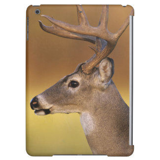 White-tailed Deer, Odocoileus virginianus, Cover For iPad Air