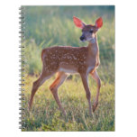 White-Tailed Deer (Odocoileus Virginianus) Fawn Notebook