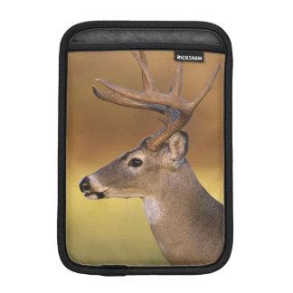 White-tailed Deer, Odocoileus virginianus, iPad Mini Sleeve