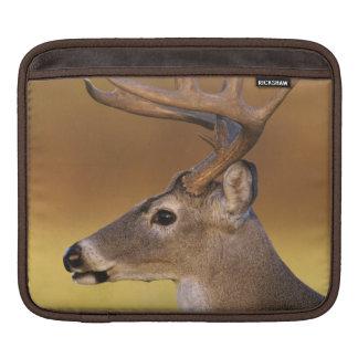 White-tailed Deer, Odocoileus virginianus, iPad Sleeve
