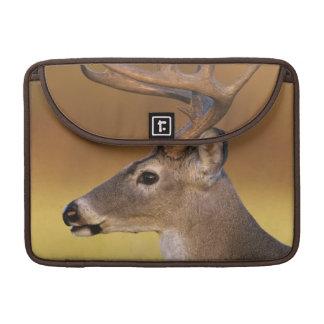 White-tailed Deer, Odocoileus virginianus, MacBook Pro Sleeve