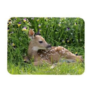 White-tailed deer (Odocoileus virginianus) Magnet