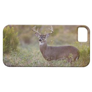 white-tailed deer (Odocoileus virginianus) male 2 iPhone SE/5/5s Case